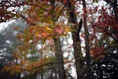 Couleurs d'automne de l'Arkansas de ressorts de Heber Photo stock