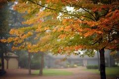 Couleurs d'automne de l'Arkansas de ressorts de Heber Photographie stock libre de droits