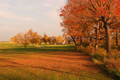 Couleurs d'automne de parcours ouvert Photo stock
