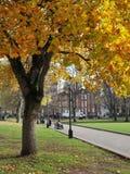 Couleurs d'automne de Parkland image libre de droits