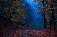 Couleurs d'automne de soirée Images libres de droits