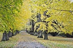Couleurs d'automne des arbres en stationnement Photos libres de droits