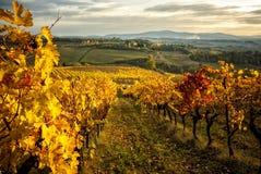 Couleurs d'automne des vignobles de chianti entre Sienne et Florence l'Italie photo stock