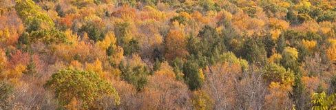 Couleurs d'automne du Connecticut Images stock