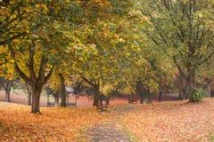 Couleurs d'automne en parc avec des feuilles au sol Image stock