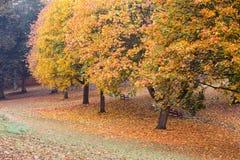 Couleurs d'automne en parc avec des feuilles au sol Images libres de droits