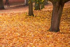 Couleurs d'automne en parc avec des feuilles au sol Images stock