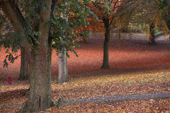 Couleurs d'automne en parc avec des feuilles au sol Photos libres de droits