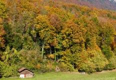 Couleurs d'automne en Suisse Photo libre de droits