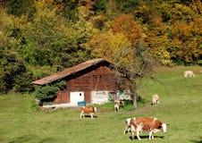 Couleurs d'automne en Suisse Image libre de droits