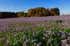Couleurs d'automne en Suisse Photo stock