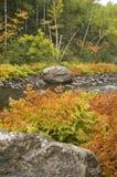 Couleurs d'automne le long de fleuve Photographie stock