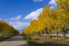 Couleurs d'automne sur une route de campagne rurale Images libres de droits