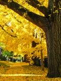 Couleurs d'automne sur une rue tranquille Photos libres de droits