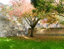 Couleurs d'Autumn Fall en parc herbeux Image stock