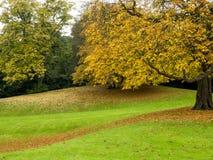 Couleurs d'Autumn Tree Photographie stock