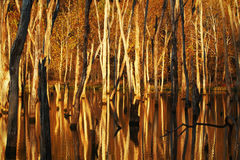 Couleurs d'or d'automne images stock