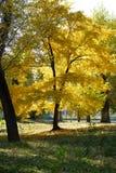 Couleurs d'or d'automne Image stock