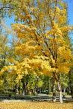 Couleurs d'or d'automne Photos libres de droits
