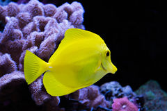 Couleurs dans l'aquarium Photos stock