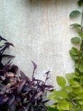 Couleurs dans le jardin Image libre de droits