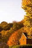 Couleurs de chute d'automne en parc Images stock