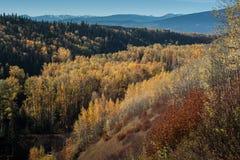 Couleurs de chute dans la forêt boréale le long du Yellowhead photographie stock libre de droits