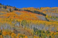 Couleurs de chute dans le Colorado, flanc de coteau boisé photographie stock