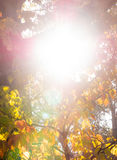 Couleurs de chute sous le Sun Photographie stock libre de droits