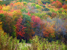 Couleurs de chute sur des arbres dans le Wisconsin Photo libre de droits