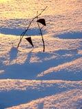 Couleurs de coucher du soleil de l'hiver Images libres de droits