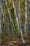 Couleurs de feuillage d'automne images libres de droits