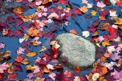 Couleurs de feuillage d'automne Photos libres de droits