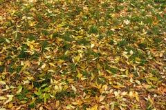 Couleurs de feuilles d'automne différentes image libre de droits