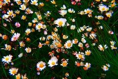 Couleurs de fleur Images stock