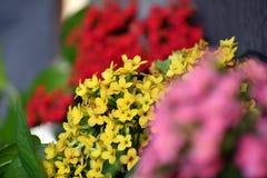 Couleurs de fleurs Photographie stock libre de droits
