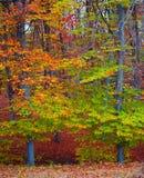Couleurs de forêt d'automne photo stock