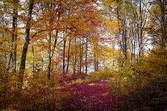 Couleurs de forêt d'automne Photos libres de droits