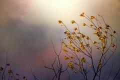 Couleurs de l'automne Photos libres de droits