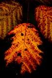 Couleurs de l'automne Image stock