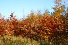 Couleurs de l'automne Image libre de droits
