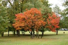 Couleurs de l'automne en stationnement Photographie stock