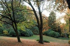 Couleurs de la chute au parc volontaire, Seattle Washington Images stock
