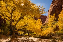 Couleurs de la chute dans le coyote Gulch Photo stock