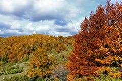 Couleurs de la forêt Photo libre de droits