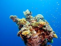 Couleurs de la Mer Rouge Image libre de droits