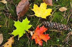 Couleurs de la saison d'automne Photo stock