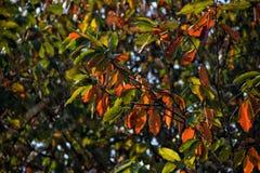 Couleurs de la vie feuilles désolées photo libre de droits