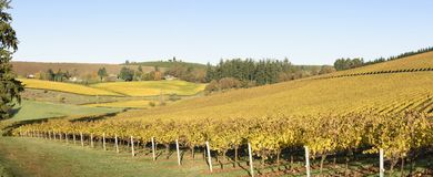 Couleurs de matin de chute des vignobles dans la mi vallée de Willamette, Marion County, Orégon occidental image stock