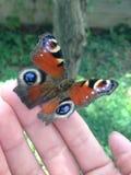 Couleurs de papillon images libres de droits